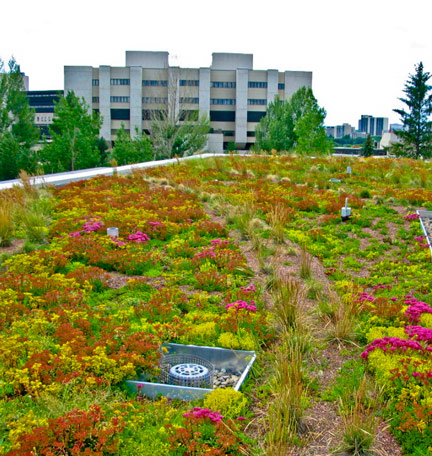 Law Living Roof
